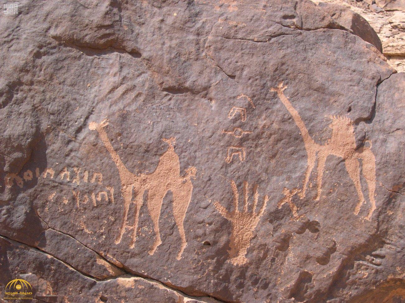 """شاهد .. صور رسومات لـ""""سفينة الصحراء"""" منحوتة على الصخر قبل 7 آلاف عام في السعودية"""