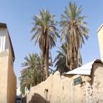 تعرف على  قصة حي بالرياض خلده شاعر قبل 1500 عام-فيديو
