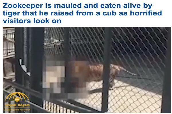 شاهد .. فيديو مرعب لنمر يلتهم حارس حياً في حديقة حيوان بالصين