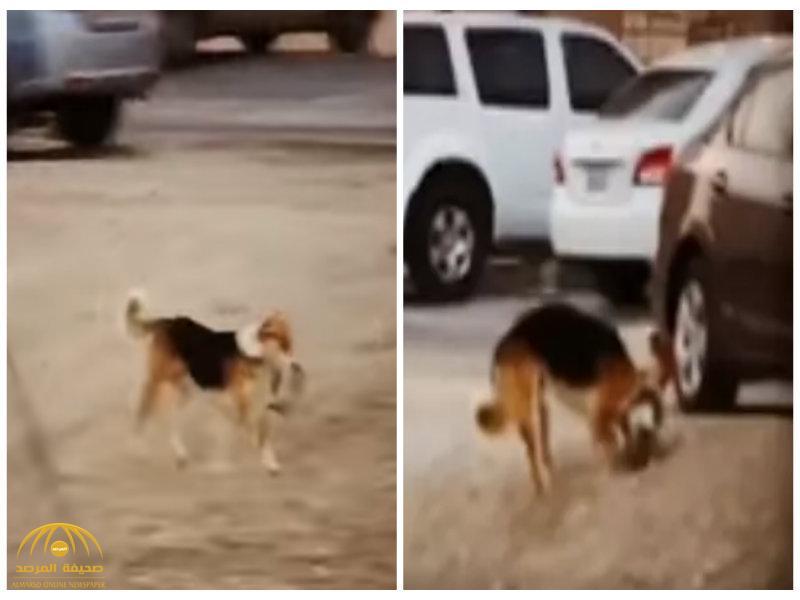 شاهد .. كلب يلتقط قطاً ميتاً في فمه ثم يركض بحثاً عن مكان ليدفنه!