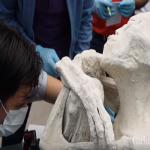 شاهد .. كائن بشري بجمجمة غريبة يحير العلماء