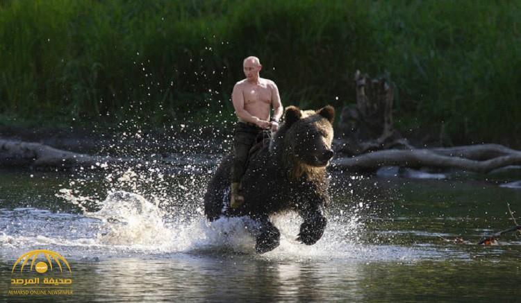"""شاهد.. أول تعليق لـ """"بوتين"""" على صورته يمتطي """"دبا"""".. ويعلق على ظهوره عاري الصدر"""