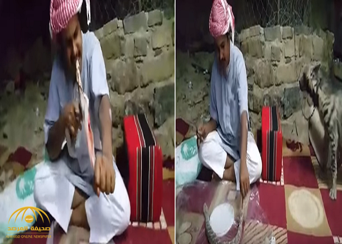 "شاهد: سعودي ""مهايطي"" يسلخ ثعبان سام بأسنانه وحيوان الضبع بجانبه!"