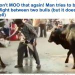 نهاية مضحكة  .. شاهد رجل سكران حاول تفريق مشاجرة بين ثورين في الهند!