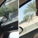 """بالفيديو .. مواطن """" كفيف"""" يثير ضجة على مواقع التواصل بتقليد صوت المفتي و""""المطلق""""!"""