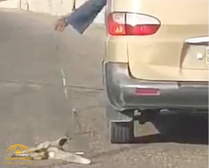 """مواطن يشعل مواقع التواصل لسحله ثعلب بسيارته في الرياض .. و""""البيئة"""" تتفاعل"""