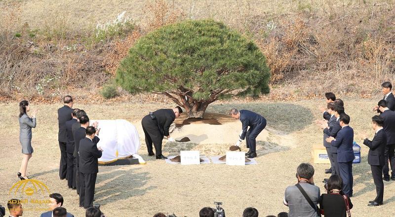 """بالفيديو والصور : شاهد .. الزعيم الكوري الشمالي ونظيره الجنوبي يغرسان """"شجرة السلام"""""""