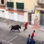 شاهد: ثور هائج يلقن رجل استفزه في الشارع درساً قاسياً.. وهذا مصيره!