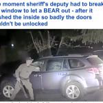 كائن لا يمكن أن  تتوقعه … شاهد ماذا أخرج  شرطي في تاهو الأمريكية من داخل سيارة متوقفة!
