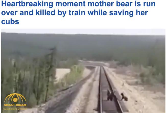 """شاهد .. """"أنثى دب"""" تضحي بحياتها من أجل إنقاذ أشبالها من الدهس تحت عجلات القطار !"""