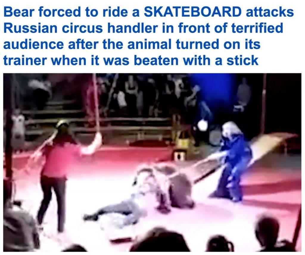 شاهد بالفيديو: دب يهاجم مدربه ويحاول افتراسه داخل سيرك في روسيا