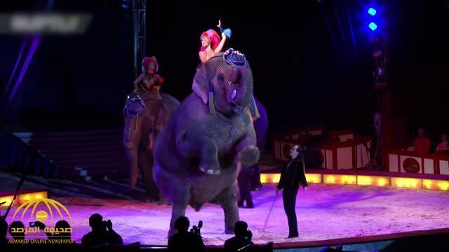 """شاهد .. لحظة سقوط """"فيل"""" على الجمهور في سيرك ألماني"""