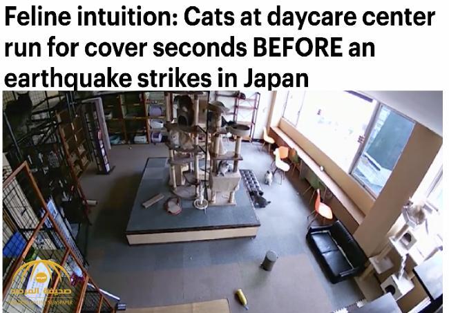 بالفيديو: قطط تتنبأ بزلزال أوساكا في اليابان قبل وقوعه