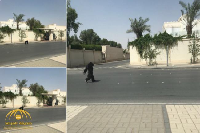 """بالفيديو والصور .. شاهد """"غوريلا"""" تتجول على قدميها مثل البشر في شارع عام بالرياض"""
