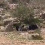 بالفيديو.. قرد يفزع فتيات سعوديات أثناء رحلة برية!