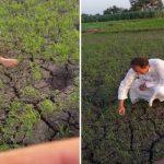 مصري يبتكر أسلوب جديد في زراعة الأرز.. فتقاضيه الحكومة المصرية!