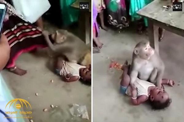 شاهد .. قرد يخطف طفلا من والديه ويهدد من يقترب منه !