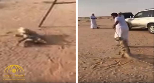 """شاهد بالفيديو : أشخاص مجهولون يقتلون حيوان """"الضبع"""" المهدد بالانقراض بطريقة بشعة !"""