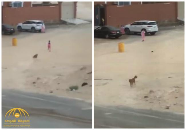 بالفيديو: كلب ضال يهاجم طفلة أمام منزلها .. شاهد .. ماذا فعلت في اللحظات الأخيرة!