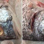 بائع أسماك يلجأ لحيلة ماكرة لبيع الأسماك على أنها طازحة – فيديو