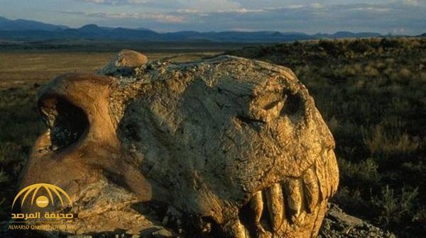 """""""أشد عملية انقراض شهدتها الأرض"""".. هذا ما تمكن العلماء من جمعه عن """"الموت العظيم"""" قبل أكثر من 200 مليون سنة"""