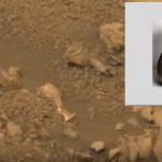 """بالفيديو : العثور على """"جرة"""" قديمة في المريخ"""