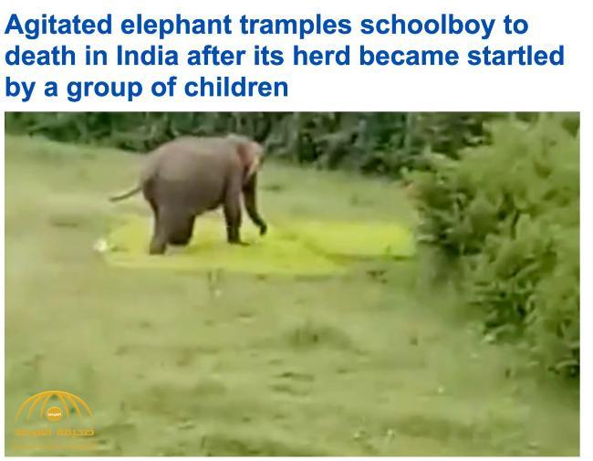 """شاهد .. فيل """"غاضب"""" يطارد طفلاً ويدهسه حتى الموت"""