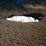 لغز العثور على جثة عقب هطول أمطار غزيرة في  الكامل .. وهذا ما تم الكشف عنه من خلال معاينتها