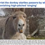 شاهد.. أنثى حمار تعزف بصوتها مقطوعة موسيقية في إيرلندا !