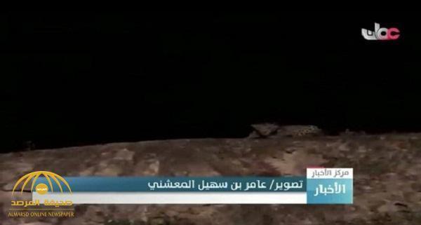 """الجهات الأمنية تكشف ملابسات العثور على """"نمر مفترس"""" في حي الجعرانة بمكة -فيديو"""