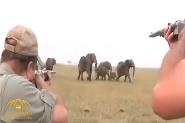 صيادون يقتلون فيلا بالرصاص.. شاهد ردة فعل القطيع!