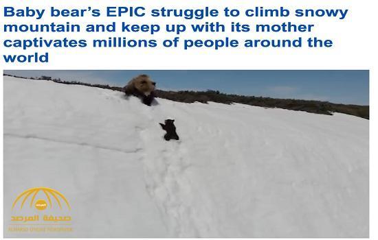 """شاهد فيديو مثير :  دب رضيع  """"مكافح"""" يحاول عدة مرات للوصول إلى والدته في أعلى قمة جبل ثلجي بروسيا!"""