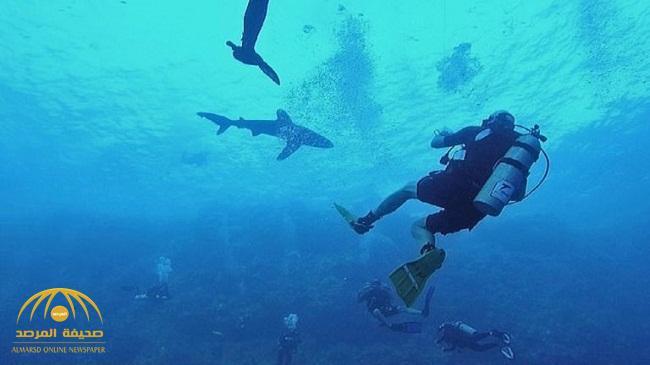 بالفيديو : شاهد..  قرش  يقضم ساق غواص في البحر الأحمر