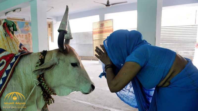 قتلى في أحداث عنف بعد ذبح بقرة شمالي الهند