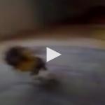 """بالفيديو: خبير تركي في قلب فضيحة.. والسبب """"الجِن""""!"""