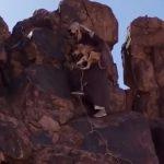 شاهد … مواطن ينقذ كلبًا عالقًا بين صخرتين في جبال سلمى بحائل