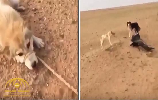 شاهد فيديو صادم : العثور على كلبين  مقيدين  بالسلاسل والحبال في الصحراء!