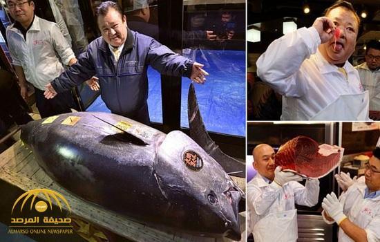 شاهد بالفيديو: أغلى سمكة تونة في التاريخ!