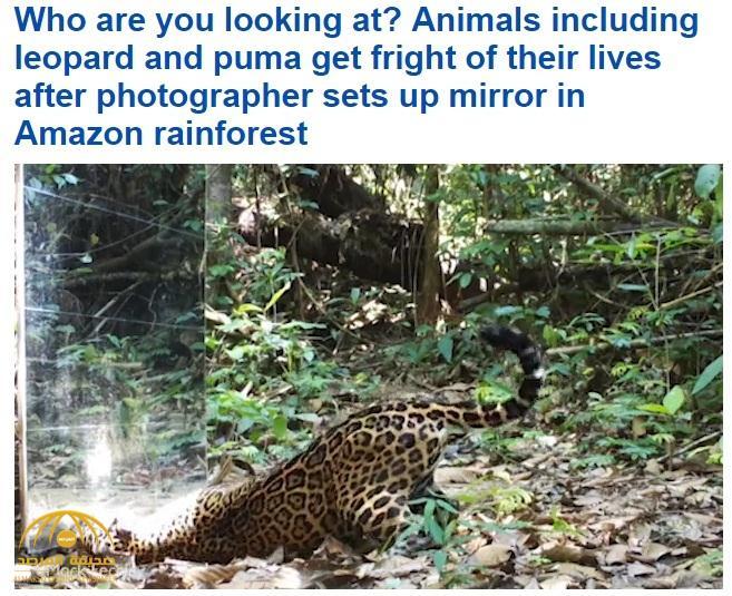 """شاهد.. ردة فعل عدد من الحيوانات بعد وقوفهم لأول مرة أمام المرآة..""""الفهد"""" يخالف التوقعات!"""