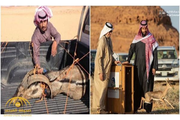 شاهد .. اصطياد غزلان بمحمية طبيعية يثير غضب نشطاء سعوديين على تويتر