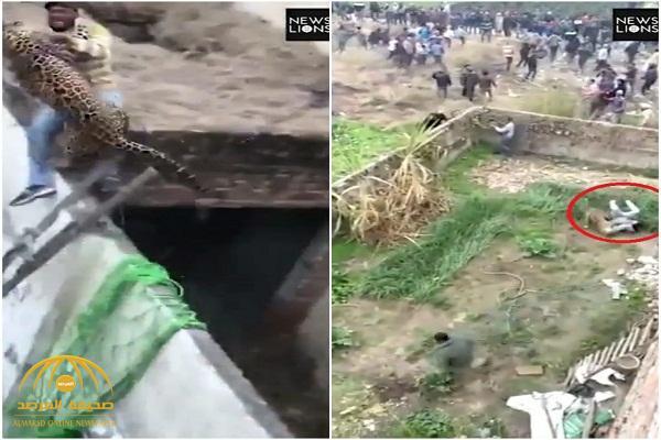 """شاهد: لحظة هجوم حيوان """"الفهد"""" على سكان قرية """"هندية"""""""