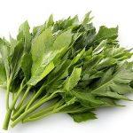 """باحثون يكشفون عن نبات ياباني  يؤخر  """"الشيخوخة"""" ويحافظ على صحة جيدة مع تقدم العمر!"""