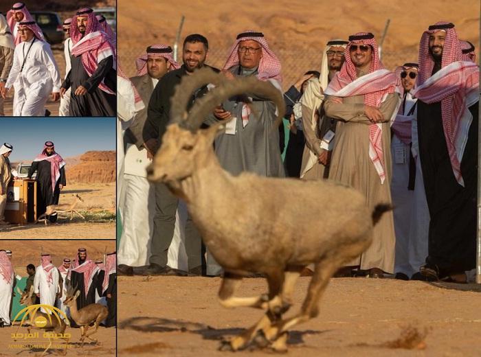 بالصور: ولي العهد يطلق محمية شرعان الطبيعية في محافظة العلا