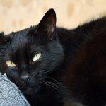 أبرزها القطة السوداء ويوم الجمعة.. تعرف على أشهر الخرافات التي تؤمن بها الشعوب!