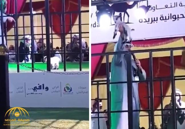 """شاهد.. بيع """"جفرة """" بـ12 ألف ريال في مزاد علني ببريدة"""