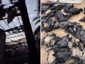 """أغلاها بقيمة 2 مليون درهم.. شاهد: تفحّم مجموعة """"طيور شواهين"""" في الإمارات بسبب صاعقة"""