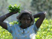 """9 حقائق غريبة عن سريلانكا لم تعرفها من قبل.. أبرزها اعتقاد سكانها بهبوط """" آدم """" من السماء على أحد جبالها!"""