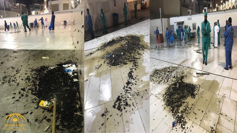 """أكاديمي: """"غريزة عجيبة"""" ترتبط بانتشار """"الصراصير"""" في مكة والمدينة.. وهذا مدى خطورتها على الإنسان!"""