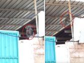 بالفيديو .. قرود تهاجم مدرسة بنات في  جدة