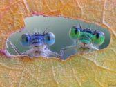 هذه الحشرات تعيش على وجهك دون علمك!